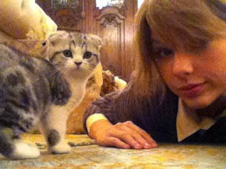 Taylor Swift Gets New Cat