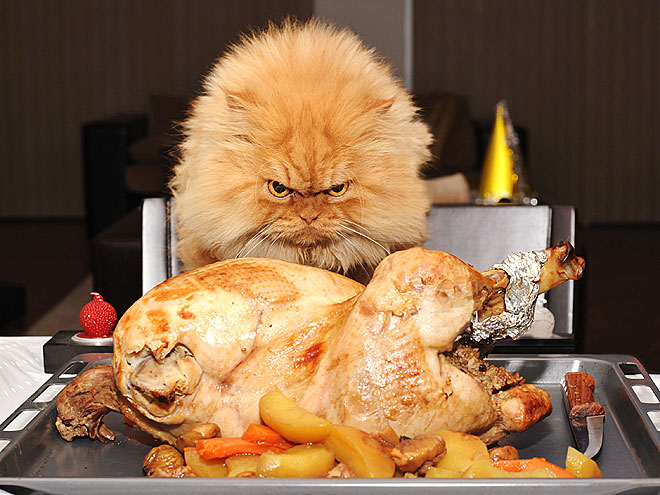 Pet vs. Turkey: 22 Hungry Stare-Dow