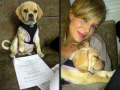 Spotted: Julie Benz Rehearses with a Puggle!