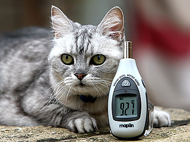 The Water Bowl: Smokey the Cat Officially Has the World's Loudest Purr