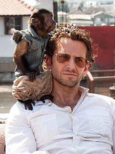 Hangover 2's Biggest Scene-Stealer: A Tiny Capuchin Monkey