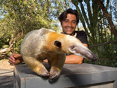 Spotted: Anteater Steals the Show from Gilles Marini
