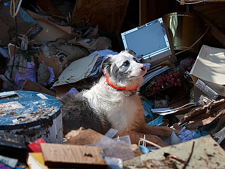 Scene from Joplin: Dog Searches for Survivors in Missouri