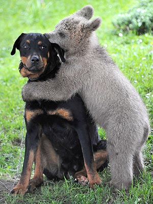 PHOTO: Bear Hugs Dog