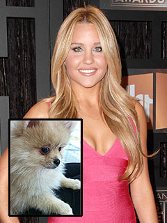 Amanda Bynes: 'Replacement Pup' Tiara Is Awesome