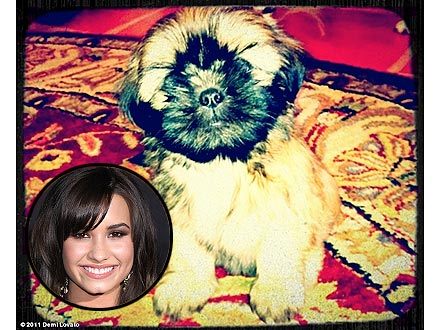 Demi Lovato Gets a New Puppy