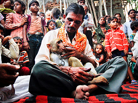 Monkey Marriage in India Deemed Illegal