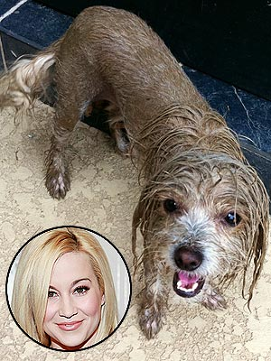 Kellie Pickler Tweets Photo of Dirty Dog Pixie