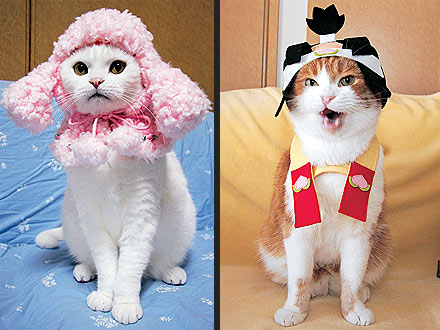 Cute pair of stylish cat