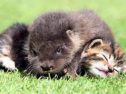 That&#39;s Adorable! Lonely Otter Befriends Orphaned Kittens