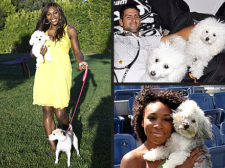 Serena Williams, Novak Djokovic, Maria Sharapova and Their Dogs