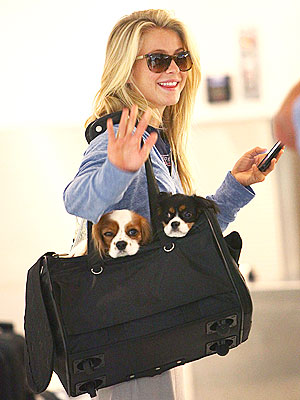 Julianne Hough's Dogs 'Know They're Famous'