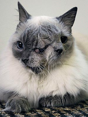 Two-Faced Cat Sets Guinness World Record