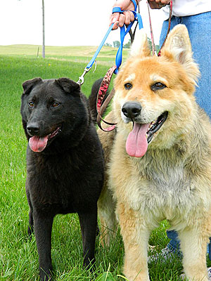 Adopt Me! Sweethearts Sammie & Sye Are So Happy Together