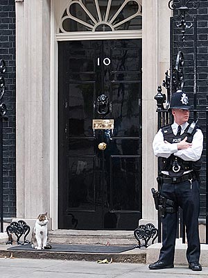Larry the Cat Plays Security Outside 10 Downing Street