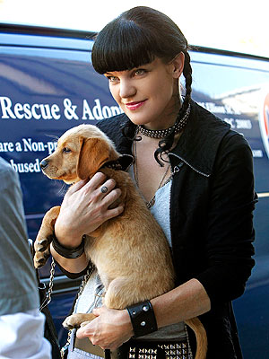 NCIS Pauley Perrette Knows Secret to Animal Longevity