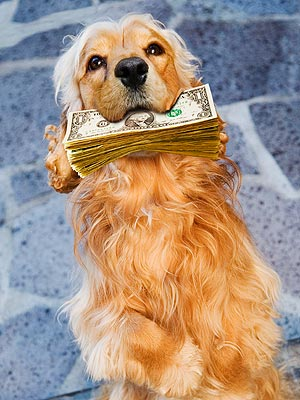 The Water Bowl: Florida Dog Eats $1,000 in Cash