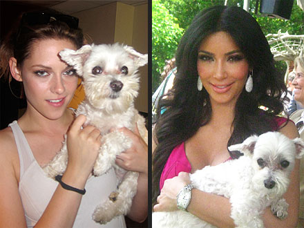 Call the Pup-arazzi! Dog Breaks World Record for Most Celebrity Photos