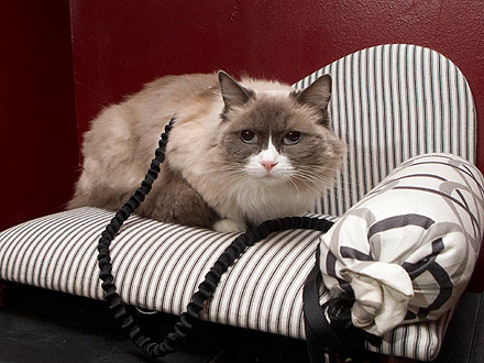 Matilda the Algonquin Hotel Cat Loses Privileges, Wears Leash