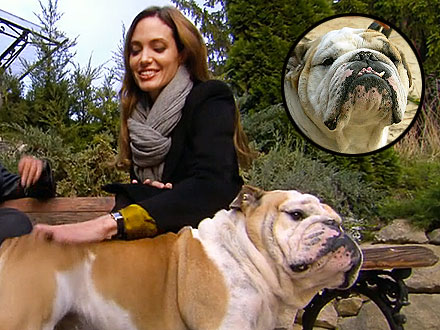Angelina Jolie and Dog Jacques on 60 Minutes