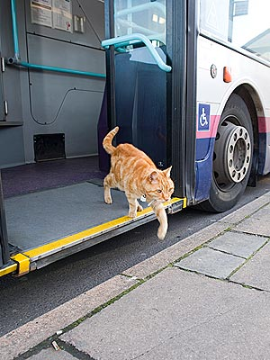 Cat Rides Bus Without Paying Fare