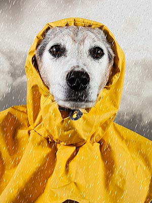 Hurricane Sandy: Pets Preparation