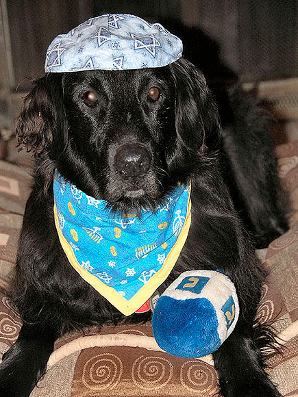 L'Chaim! Hanukkah Pets