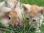 Bunnies! Bunnies! Bunnies!
