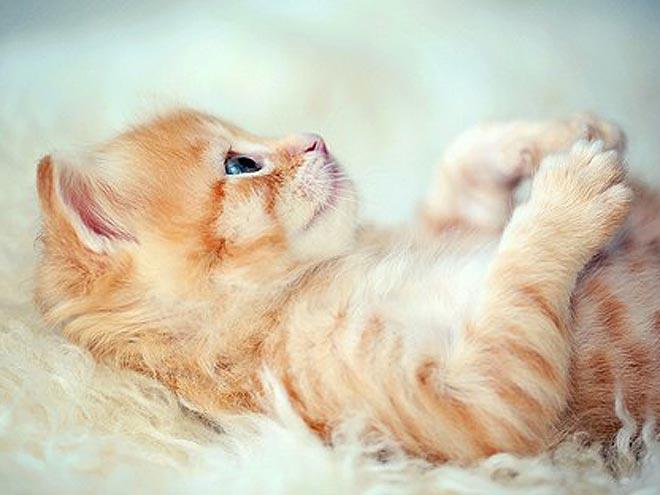 PHOTOS: Kittens So Precious It Hurts
