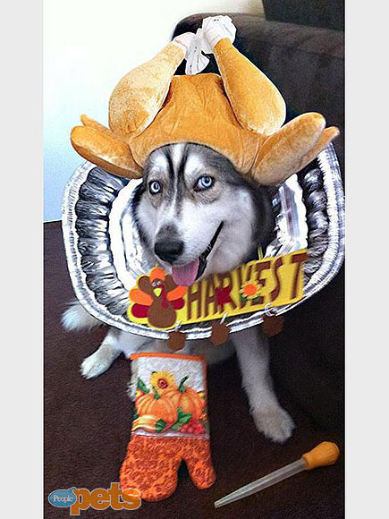 Gobble, Gobble! Pets Go Wild for Turkey Day