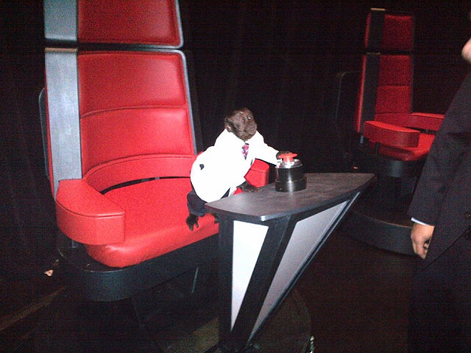 This Is The Voice – with Pets!