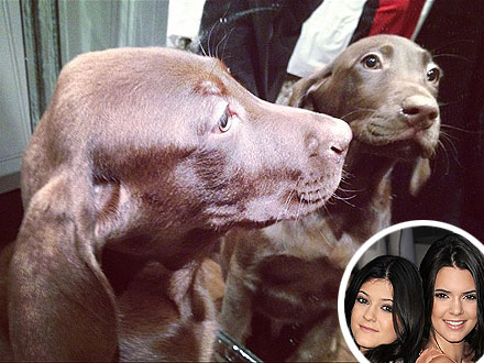 Kendall  Kylie Jenner  on Kendall Jenner  Kylie Jenner Get Christmas Puppies   People Com