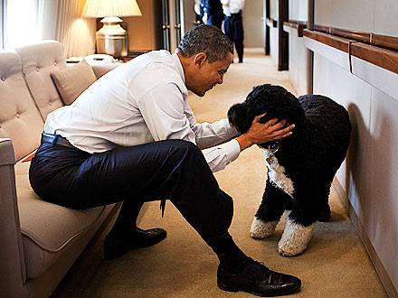 Bo & President Obama: Playtime on Air Force One