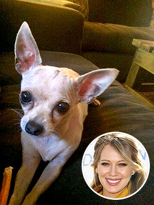 Hilary Duff's Dog Recovering After Brain Surgery
