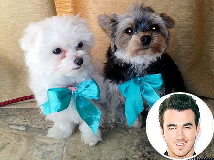 Kevin Jonas Wants to Potty Train His Dogs