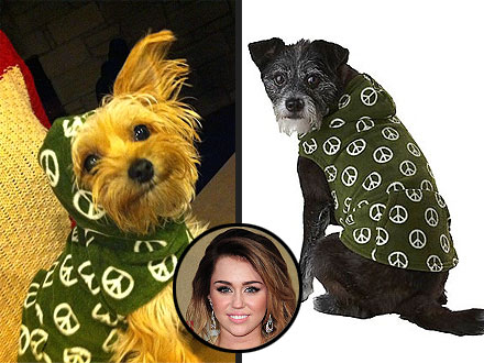Miley Cyrus's Clothes for Dog Lila: Where to Buy