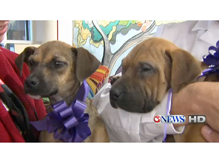Sick Puppies Walk Themselves to Hospital