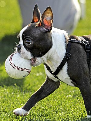 Play Ball! Pitcher's Dog Goes to Spring Training
