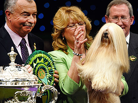 Lhasa Apso Wins Best in Show at Crufts
