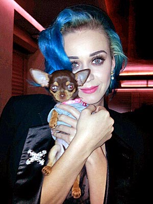 Katy Perry Poses with Fan&#39;s Dog in Paris