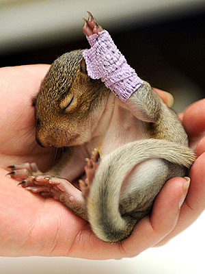Aww! Injured Baby Squirrel Wears a Cast