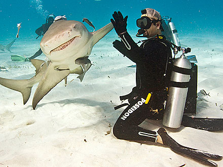 Fin-sanity! Shark Gives Diver a High-Five
