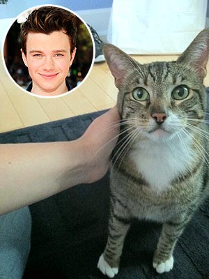 Chris Colfer Adopts Cat