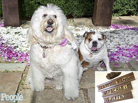 Ricki Lake Wedding: Dogs Join Secret Ceremony
