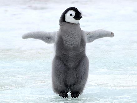 What a Twirl! Baby Penguin Is a Ballet Dancer
