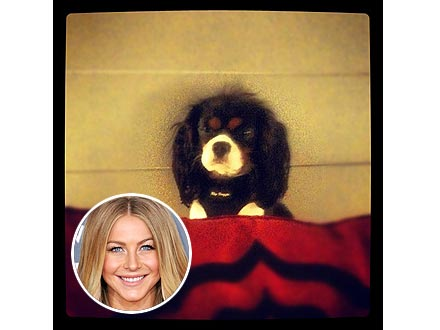 Julianne Hough's Dog Harley Gets Spayed