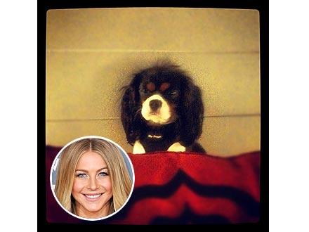 Julianne Hough's Dog Harley Gets Spayed
