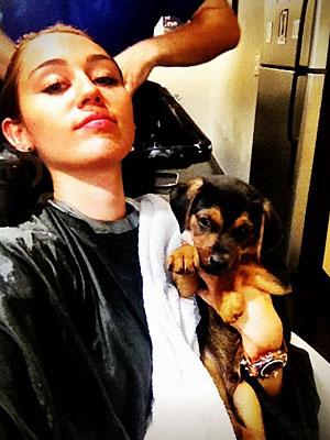 Miley Cyrus Real  on Miley Cyrus Adopts Dog   People Com