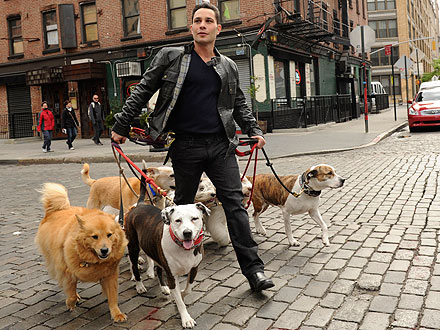 Justin Silver Stars in New Series Dogs in the City