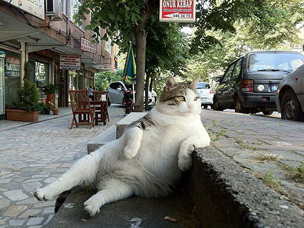 Godfather Cat Lounges Like a Boss
